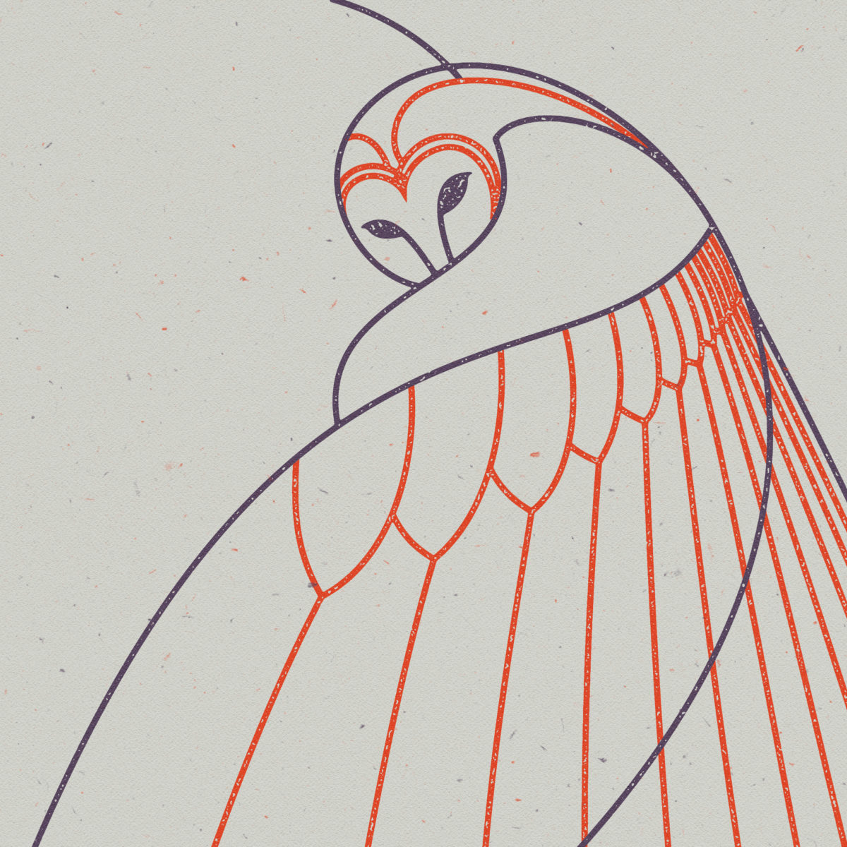 Animal Studies: Tawny Owl